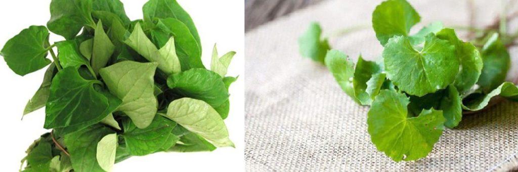 [Bật mí] 7+ cách làm đẹp siêu hiệu quả với rau má 13