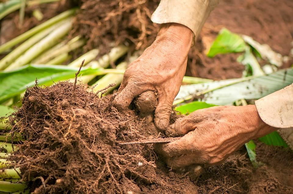 Tinh bột nghệ Đà Nẵng - Nguyên chất - Vườn Nhiên 1