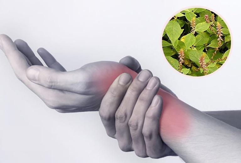 Cây cỏ xước trị bệnh gì