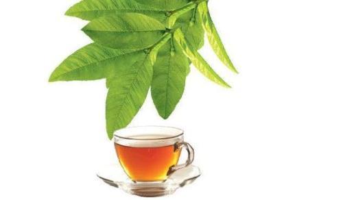 Lợi ích của trà lá ổi đã được khoa học chứng minh