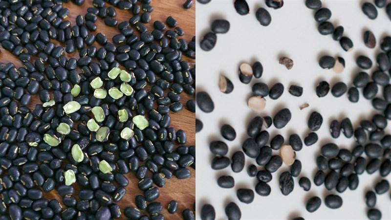 Phân biệt loại đậu đen